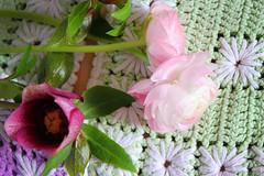 From my garden (Teresa Micheile Henderson) Tags: pink flowers floral garden maroon ranunculus helleborus