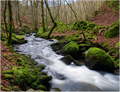 The Inchewan Burn (eric robb niven) Tags: walking landscape scotland perthshire burn dunkeld birnam inchewan ericrobbniven pentaxk50