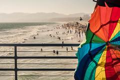 Santa Monica (visually_conscious) Tags: ocean california travel seascape bird beach water la losangeles sand waves santamonica