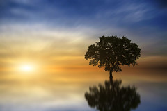 Heavenly Tree II (Carlos Gotay Martnez) Tags: sky landscape lake sunset water reflection nature blue sun light clouds outdoor tree summer beautiful orange horizon alone serene serenity peacefulness