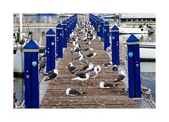 Playeando... (ngel mateo) Tags: espaa seagulls beach andaluca spain playa andalusia gaviotas almera adra ngelmartnmateo puertodeadra ngelmateo