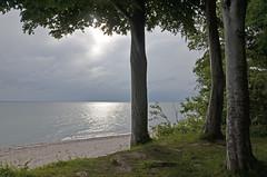 Sea - the Light (unkel.unterwegs) Tags: light sea tree germany deutschland hope coast licht meer beam silence meditation sonne morgen baum kiel schleswigholstein küste stille hoffnung lichtstrahl
