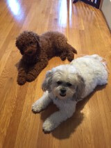 Archie is Molly Dee and Chewy II's boy!
