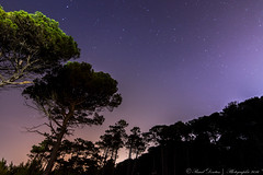 Starry Night over the pinewood - Cecina, Toscana (IT) (Pascal Dentan) Tags: 70d canon 16 11 tokina shot best awesome toscane italie italy toscana cecina night star toile italia pinewood ciel extrieur lumire light voie lacte galaxie longue exposition long exposure haveaniceday