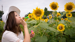 Young woman blowing bubbles in sunflower field (Apricot Cafe) Tags: asianethnicity canonef1635mmf28liiusm japan kanagawa enjoy happiness nature oneperson outdoor refresh strawhat summer sunflower traveldestinations vacation walking weekendactivities woman youngadult zamashi kanagawaken jp img647271