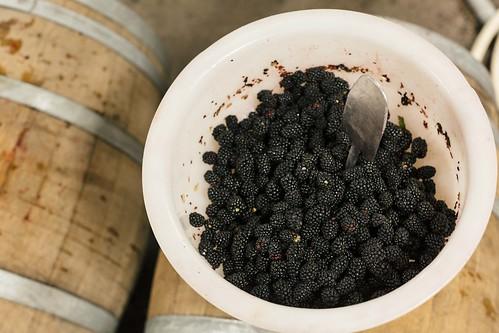 Filling Coolship Barrels with Blackberries