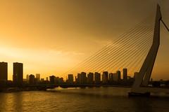Erasmus Bridge (michael_hamburg69) Tags: rotterdam niederlande netherlands sdholland holland southholland bridge brcke erasmusbrug erasmusbrcke schrgseilbrcke nieuwemaas rheinmaasdelta erasmus strasenbrcke dezwaan vanberkelbos 1996 cablestayedandbasculebridge steel stahl nl