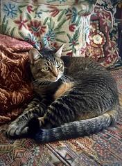 Tapestry of life (kimbar/Thanks for 2.5 million views!) Tags: penelope cat pillows sofa oakland california