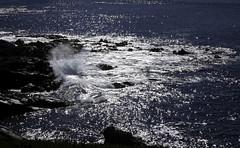Coastal_Color II (Joe Josephs: 2,861,655 views - thank you) Tags: california hiking colorphotography californiacoast californiacentralcoast cambriacalifornia landscapephotography outdoorphotography joejosephs joejosephsphotography copyrightjoejosephs fujifilmxt1 copyrightjoejosephs2015