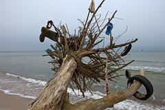 Darss Winter (Burminordlicht) Tags: balticsea landschaft ostsee prerow vorpommern darss kste weststrand bodden winterlandschaft ostseekste darsswald nationalparkvorpommerscheboddenlandschaft