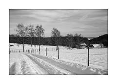 Winteridylle II (Holger Weiß) Tags: leica winter m8 holger voigtländer badenwürttemberg weis ultron birken heckengäu 228mm