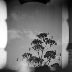 (Irene Stylianou) Tags: blackandwhite bw 120 film nature analog mediumformat square lomo lomography song doubleexposure toycamera pearljam 120film multipleexposure diana xp2 filmcamera dianaf mx ilford analogphotography lomograph plasticcamera 400asa 400iso blackandwhitephotography lomocamera songlyrics filmphotography blackandwhitefilm naturescene analogcamera ilfordfilm ilfordxp2super400 mediumformatphotography hardtoimagine squarephotography filmdatabase lomographydianaf irenestylianou