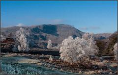 Tarn Hows (cben) Tags: winter england landscape frost unitedkingdom lakes 2008 nearsawrey