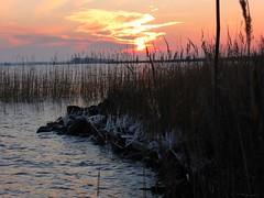 Icy, Slotermeer NL 2015 (Alta alatis patent) Tags: sunset ice reeds slotermeer