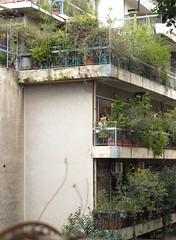 the clown/snowman bipolar (g.vryttia) Tags: city winter snowman funny balcony athens bohemian