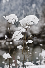 snow flower (SusanCK) Tags: snow landscape leavenworth susancksphoto