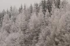 DSC_0084 (Alexandra Gaeva) Tags: park christmas winter mountain snow black tree nature forest landscape blackwhite rocks republic czech national krkonose krkonoe mlyn spindleruv