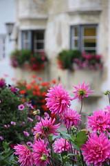 Bressanone (stgio) Tags: flowers dalie
