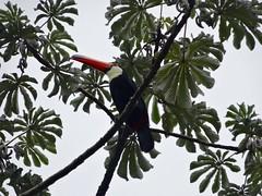 Iguazu (Arg)-114