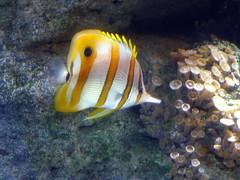 Aquarium de Paris  (7) (Mhln) Tags: paris aquarium requin poisson trocadero poissons meduse 2015 cineaqua