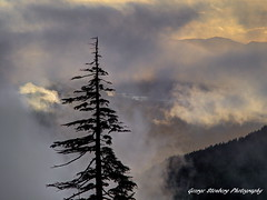 Stand Alone (George Stenberg Photography) Tags: sunset clouds pacificnorthwest washingtonstate snag lakecushman olympicmountains