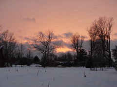 Sunset on a snowscape. (Gerald Barnett) Tags: pink blue schnee trees winter sunset sky usa sunlight snow art luz nature silhouette backlight clouds skyscape landscape outdoors grey landscapes illinois artistic availablelight ambientlight gray silhouettes tranquility atmosphere naturallight calm lumiere serenity neve mystical serene neige backlit wintertime snowfall lux tranquil nix luce cloudysky snowscape pinkclouds snowscene settingsun lumen artphoto backlighted naturalcolors neive snowontrees southernillinois serenitynow skyscene artinnature artpic beautifulsunset artpicture naturalcolor treeswithsnow outdoorphotography
