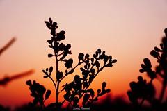 A6000 (YosufKuwail) Tags: sunset sun photography sony sonyalpha تجريد sonyalphaa6000 sonyilce6000