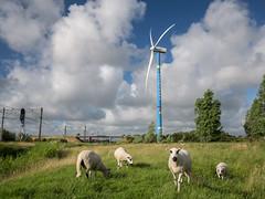 Windmolen Heemskerk (Paul Beentjes) Tags: netherlands nederland heemskerk windmill windmolen windturbine blue blauw sheep motorway snelweg clouds wolken