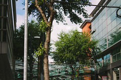 City (JacksonSwaby) Tags: city tree trees building buildings structure architecture glass reflection sky cloud street lamp post sign light wire