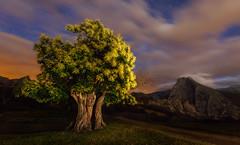 El castao y Pea Ventosa (el_farero) Tags: nocturna nightshot castao clouds sky tree mountain cantabria farero canon stars arbol viento