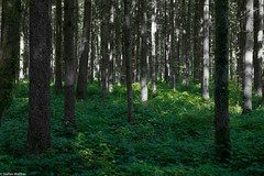 down green (picturesbywalther) Tags: green grün down unten wald forest nature unterholz bäume trees wood grey grau outdoor