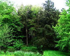 Forest And Pond (Tim Niclas Marvin Mller) Tags: outdoor forest pond wald weiher