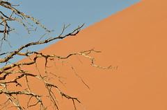 Sossusvlei, Namibia (silviasalvi) Tags: tree deserto desert sabbia sand dune duna africa namibia nature