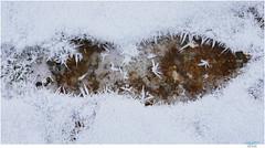 C O O L (Lutz Koch) Tags: footprint foot fusabdruck eis ice winter sommer khl cool cold kalt elkaypics lutzkoch abkhlung cooling summer