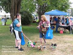 DAT2016_Crowd_1089 (greytoes_99) Tags: agility cat dat2015 dat2016 event humanesocietytacoma people summer tacoma tacomahs volunteers dog humananimalbond lakewood wa us