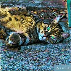 Orazio (matteocastelli331) Tags: cat catphoto catphotography prisma filtro canoneos canon canonphoto