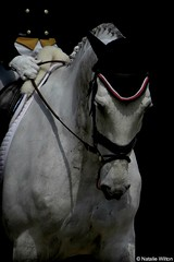 Rolex8 (NRJWphotography) Tags: rolex rolex2016 lexington kentucky horse greyhorse dressage warmupring warmup