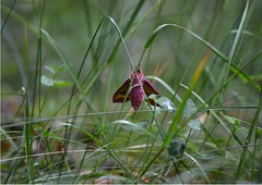 Mritz Nationalpark (1), NGIDn1846705456 (naturgucker.de) Tags: ngidn1846705456 naturguckerde mritznationalpark cbarbaraeberle