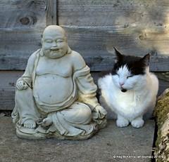 DSC_4916 - Vinnie on Archie's Grave (whiskymac) Tags: vinnie pets cats feline animals domesticcats