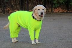 dog yellow warm bright luminous onesie highvisibility equafleece