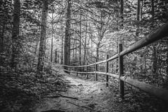 Expedition into the Woods (QuintonHurstPhotography) Tags: life park wood trees blackandwhite tree art nature forest fence woodland way landscape outside outdoors photography wooden artwork woods flora scenery day post natural state outdoor hiking earth path tennessee explorer fineart fine scenic falls adventure explore trail fencing posts passage exploration pathway burgess fineartphotography thegreatoutdoors passageway burgessfalls