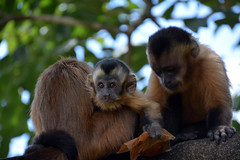 Macacos (Billy W Martins ) Tags: brasília monkey nikon df federal distrito d7100