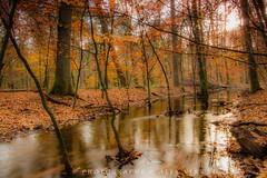 Hierdense beek - Autumn colors (EXPLORE) (Alex Verweij) Tags: autumn color water colors canon leaf bomen beek herfst blad 7d leafs 16mm exif kleur bladeren timeshot statief hierden tijdopname alexverweij