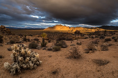 Clouds, Light, Cholla (Joshua Tree National Park) Tags: blue light cactus sky clouds rocks desert joshuatree cholla joshuatreenationalpark