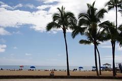 Waikiki Beach (sarowen) Tags: trees tree beach palms hawaii sand waikiki oahu palm palmtrees palmtree honolulu waikikibeach honoluluhi downtownhonolulu honoluluhawaii