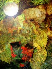 Diana the Huntress (virtually_supine) Tags: moon collage woodland artistic creative textures montage layers digitalmanipulation goddessdiana pse9 photoshopelements9 treatthis60 sourceimagebyskagitrenee