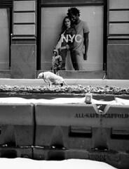 NYC (sglassphoto) Tags: nyc blackandwhite film 35mm streetphotography contax 35mmfilm pointandshoot streetphotos blackandwhitephotography contaxt2 hardcorestreetphotography bwfilm streetphotographer nycstreets filmisnotdead streetbw nycphotography nycphotographer nycstreetphotographer