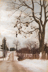 Road to the Shoe Tree (martinaschneider) Tags: road trees winter snow tree shoes topaz