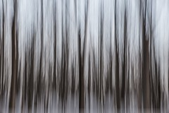 Abstract winter forest (neildaintree) Tags: trees winter abstract nature forest fuji slowshutter fujifilm tclx100 x100t exposuredragging