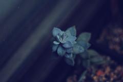 () Tags: plants